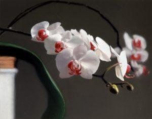 Gerhard Richter Orchids